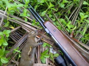 Airgun: Hunting with HW77 - contain graphic image